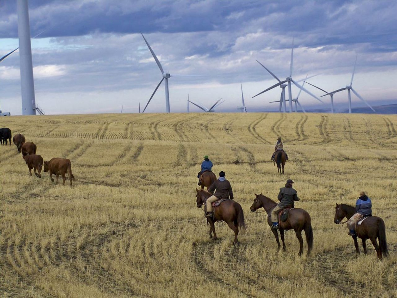 People riding horses with wind turbines